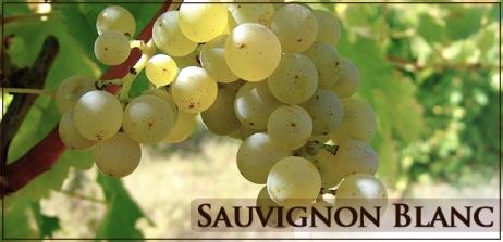 uva-sauvignon-blanc