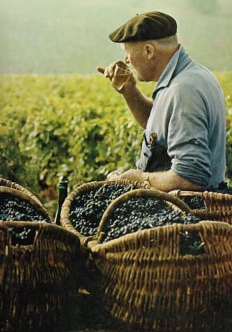 homem vinicola
